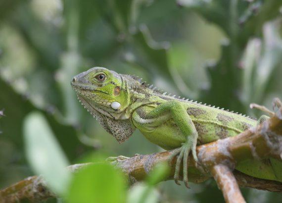Foto uit prachtige natuur Bonaire
