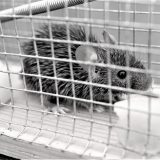 Schakel een professional in voor muizenbestrijding